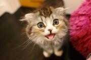 猫、おどろき